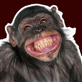 Risas Y Monos