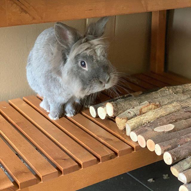 What did flappie see there?☺️💚 . . . . . #flappiecute #animalsofinsta #rabbitsofinstagram #konijn #rabbit #facts #becareful #animallove #spines #prickle #lapin #conejo #ارنب #兔#fun #friends
