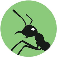 Ants Australia