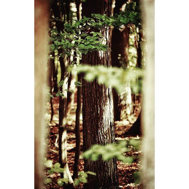 Już nie mogę się doczekać jesieni i tych wszystkich kolorowych liści🍂🍁 #autumniscoming#autumn#september#forest#ignature#trees#ournaturedays_5k#ournaturedays#nature#naturephotography#naturephoto#natureshots#beautifulnature#naturelovers#forestlovers#природа#лес#las#jesień#sunny#forestphotography#wood#woods #fall#natureshots#forestlife#forest_captures#autumnvibes#fallvibes#beautifulnature#forestvibes