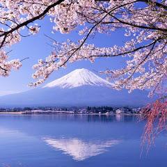 富士サクラ