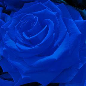Blue Rose Channel Japan