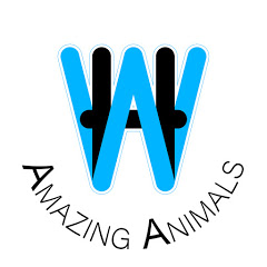 WH Amazing Animals
