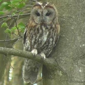 Astronomy & Owl's Astronomy/Owls