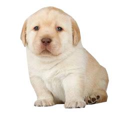 Rolas para perritos con depresión