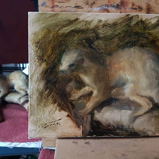 Probably will take this further tomorrow.. #weasel #taxidermy #allaprima #allaprimapainting #oilpainting #oilsketch #fromlife #realism #impressionism #oilpainter #stilllife #animalart #halifaxns #henrytian