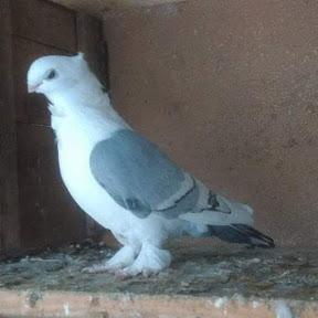 Gördesli Kuşçu Başkan