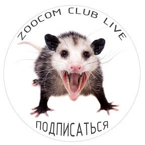 Zoocom Live