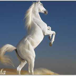 2野生の馬