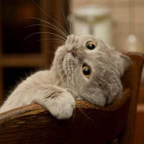 ม.แมว วุ่นวาย