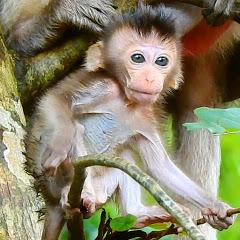 Monkey Daily Babies