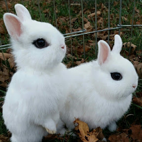 Dhaka Fancy Rabbit Farm