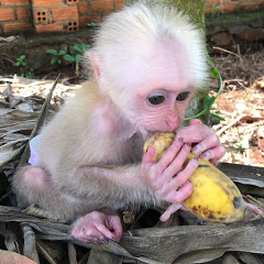 Monkey Baby Best