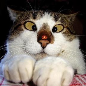 Gato chancla