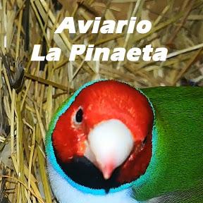 Aviario La Pinaeta - Mundo de Aves