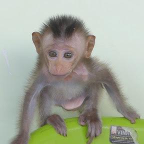 Monkey Niki