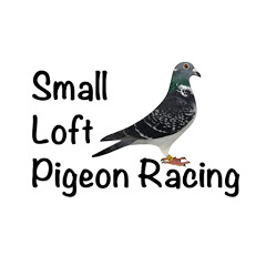 Small Loft Pigeon Racing