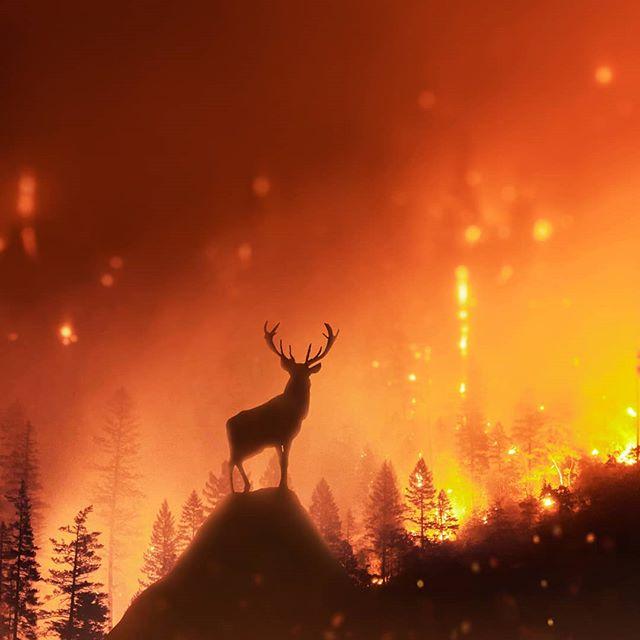 The Burning Forest 🔥😢 #amazonia _ _ _ _ _ #forest #amazon #deer #visualart #visual_creatorz #earthpix  #theuniversalart #instagram #complexphotos #launchdesigns #eclectic_shotz #photoshop #enter_imagination #scarystories #19skillz #hsdailyfeature #creativeoptic #savetheworld  #prayforamazon  #manipulation #creartmood #manipulationclan #edit_perfection #discoveredit  #digitallyart #discoveredit #bennyreview