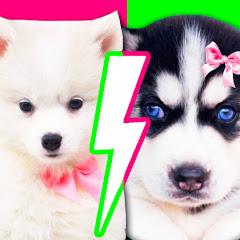 Pets LUNA vs BELLE