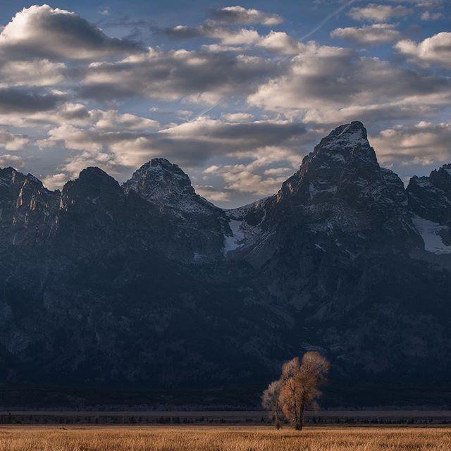 The Grand Teton  #nationalparkgeek #westbysouthwest #ThatsWY #52weeksofnature #withmytamron #nationalparkfans #nationalpark #goparks #usinterior #mountainhardwear #icon #igrefined #ig_shotz_trees #raw_alltrees #tree_brillance #splendid_earth #splendid_shotz #landscapephotography #d850 #nikonnofilter #nikontop 📷 @nikonusa d850 Lens: @tamronusa 70-200 2.8 G2  Tripod: @siruiimaging w2204