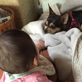 スムースチワワと赤ちゃん
