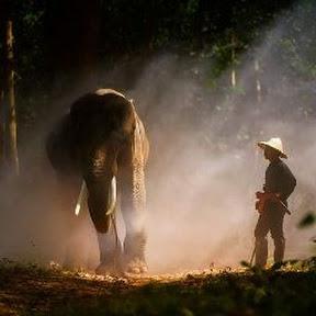 ควาญช้าง ไทบ้าน