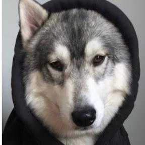 my chemical doggo
