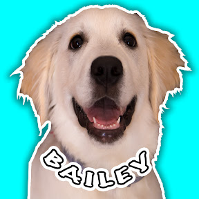Funny Dog Bailey