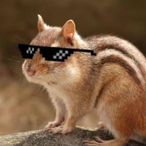 옥수수다람쥐