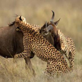 동물들의싸움 - 동물들의싸움