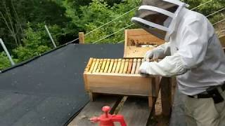Summer Inspection of Honeycomb 3X Fold-Hive