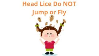 Facts of lice video