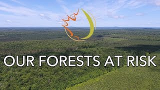 Our Forests at Risk - TRAILER