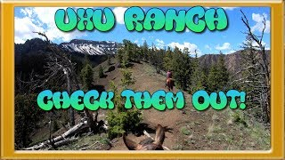 Best Place to Vacation/Stay Near Yellowstone National Park - UXU Ranch near Cody Wyoming