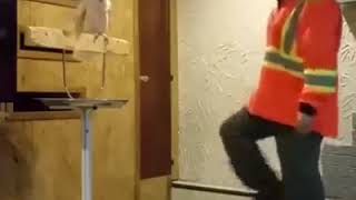 Macaw argues with its owner for breaking his cage - so cute