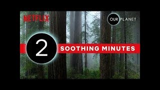 Our Planet   2 Minutes of Soothing Scenery   Netflix