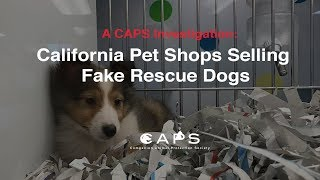 A CAPS Investigation: California Pet Shops Selling Fake Rescue Dogs