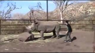 Awkward Man Tries to Have Sex With a Rhino