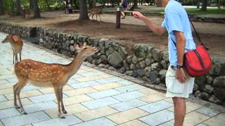 Communication with animals: saluting the deer in Nara