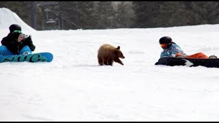VIDEO A stray cub approaching snowboarders in California has wildlife officials wondering what to do