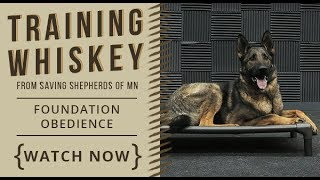 Training Whiskey - Foundation Obedience