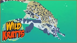 wild kratts cheeks the hamster full episode youtube