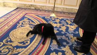Literary Traveler Visiting Catie Copley at the Fairmont Copley Plaza in Boston