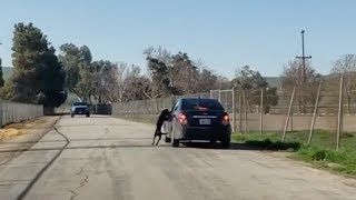 Video Shows Dog Running After Owner After He Abandons It On The Side Of The Road